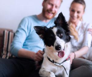 Confira dicas para criar o seu pet em apartamento